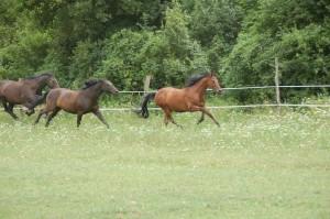 futó lovak