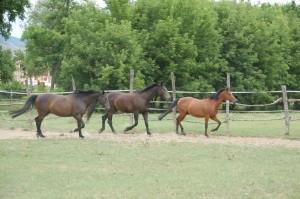 lovak sorban